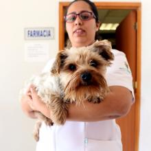 campaña en hospital veterinario8