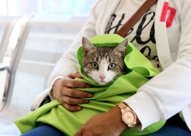 campaña en hospital veterinario1